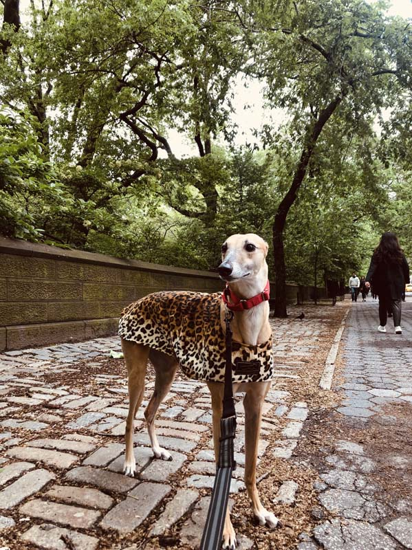 client's dog on a walk